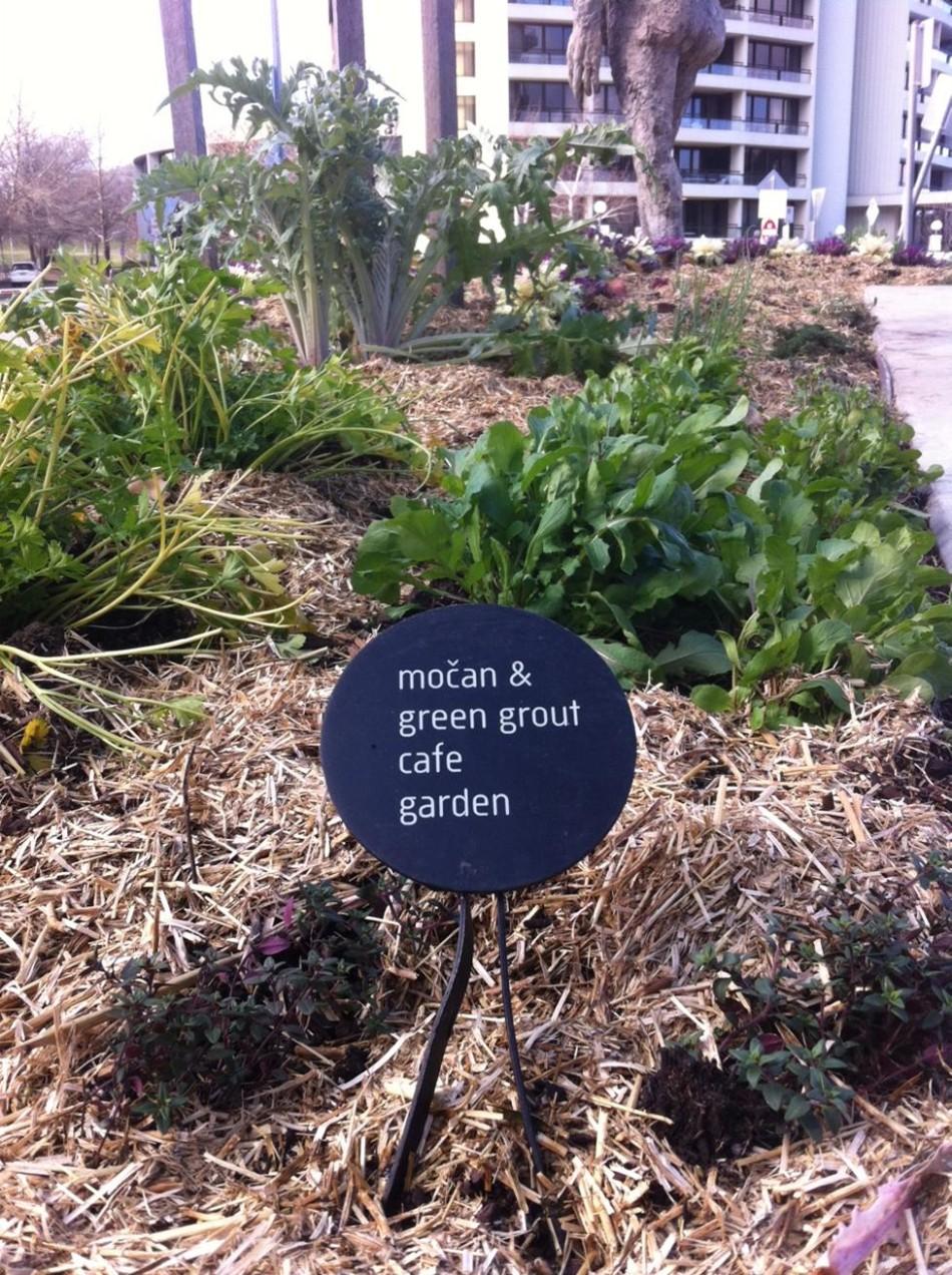 Mocan garden